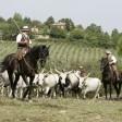 cavalli_vacche